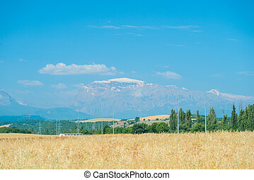 Yellow flower meadow with snow covered mountains  beautiful lsndscape