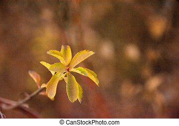 yellow flower on a blurred background. deadwood