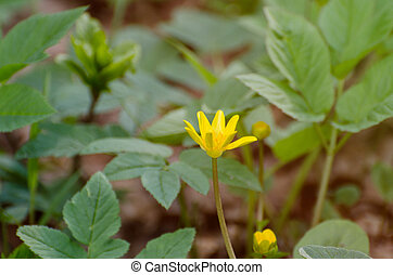 Yellow flower on a green background