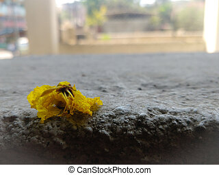 yellow flower on a road