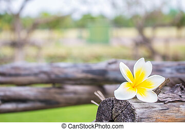 flower on a wooden