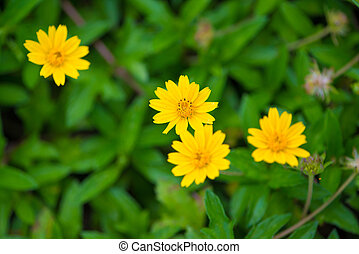 Yellow flower on green background
