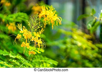 Yellow flower on the green blur leaf background in the garden.