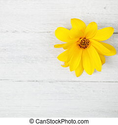 Yellow flower on white painted wooden boards