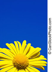 Yellow flower over blue sky