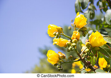 yellow flower with blue sky background