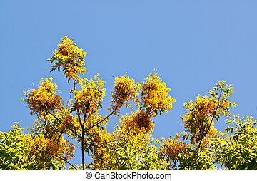 yellow flower with blue sky