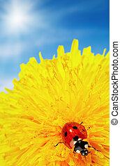 Yellow flower with ladybug