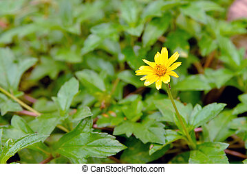 yellow flower with leaves background