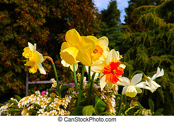 Yellow flowering gladioli in the park on a sunny day.