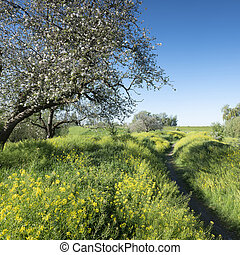 yellow flowers and apple blossoms under blue sky in spring