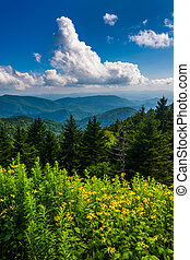 Yellow flowers and view of the Appalachian Mountains from...