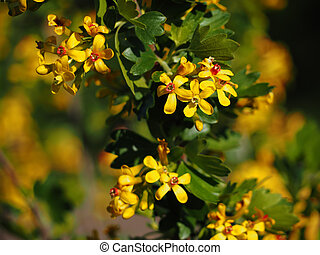 Yellow flowers at the garden background