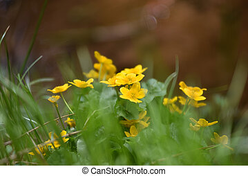 Yellow flowers blooming in the outdoors