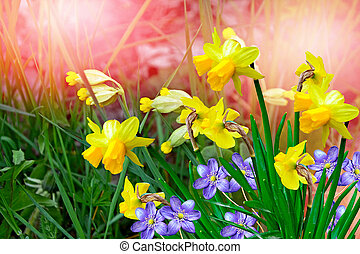 Spring landscape and flowers