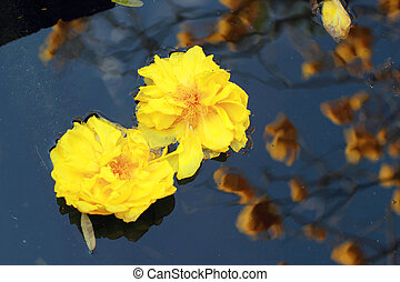 Yellow flowers floating in a pond and reflections tree