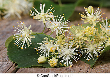 yellow flowers fragrant linden macro on a wooden table. ...