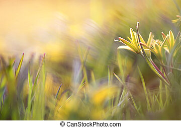 Yellow flowers goose on the grass natural colorful spring background