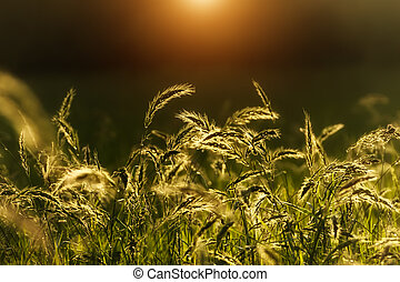 Flowers grass with sunlight background.