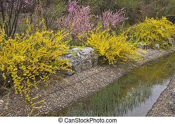 yellow flowers in a garden, china