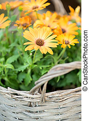 Yellow flowers in basket