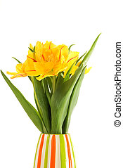 Yellow flowers in colorful vase isolated on white background