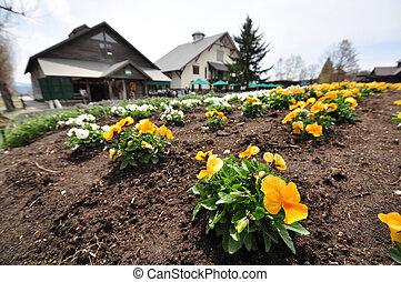 Yellow flowers in farm