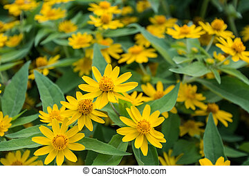 yellow flowers in garden