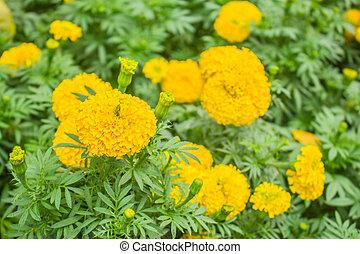 Yellow flowers in garden.