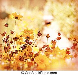 Yellow flowers in meadow