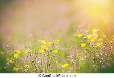 Yellow flowers in meadow - buttercup flower in spring