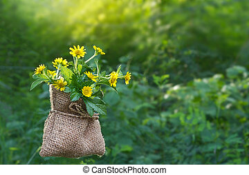 Yellow flowers in sack on the nature at morning, soft focus