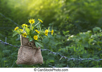Yellow flowers in sack with wire on the nature at morning, soft focus