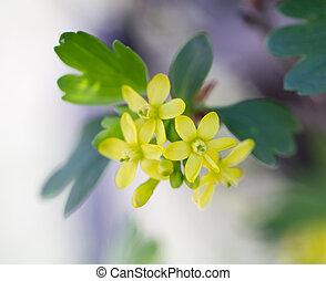 yellow flowers in spring. macro