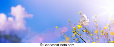 Yellow flowers in summer autumn field on background blue sky with sunshine and white butterfly. Summer natural landscape with copy space