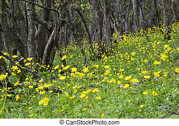 Yellow flowers in the forest