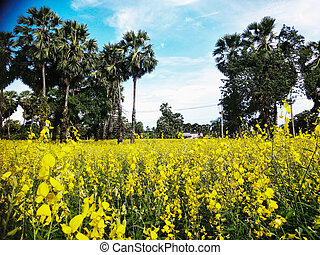 Yellow flowers in the rice field