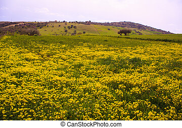 Yellow flowers in the spring