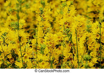 yellow flowers in the sunlight