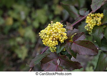 Yellow flowers on a bush in spring