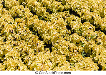 Yellow flowers on a flowerbed in the park.