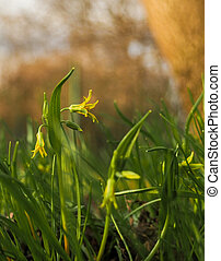 Yellow flowers on a green slope in the rays of the spring sun