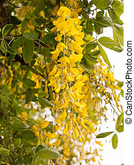 yellow flowers on a tree outside in spring