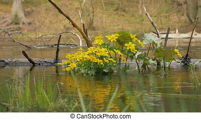Yellow flowers on in the river