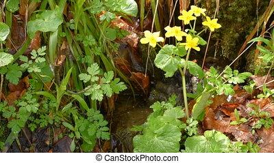 Yellow flowers on stream shores