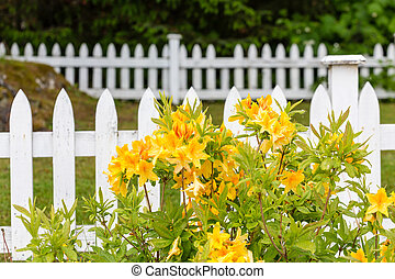 Yellow Flowers on White Picket Fence