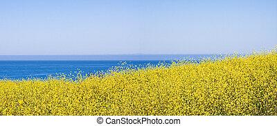 Yellow Flowers Panorama - A panoramic view of yellow mustard...