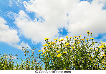 yellow flowers under a cloudy sky
