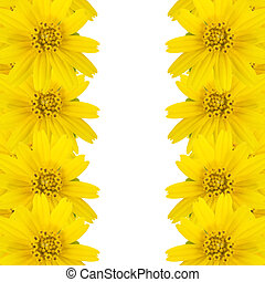 yellow flowers with copy space