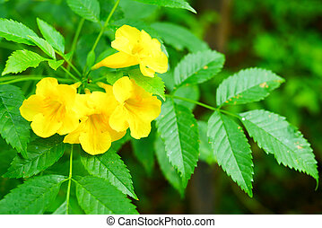 Yellow flowers with green leaves background